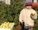 сибирские яблочки...