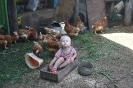 Курочка в курятнике