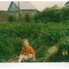Вот!!! Кто вырос в огороде!!!